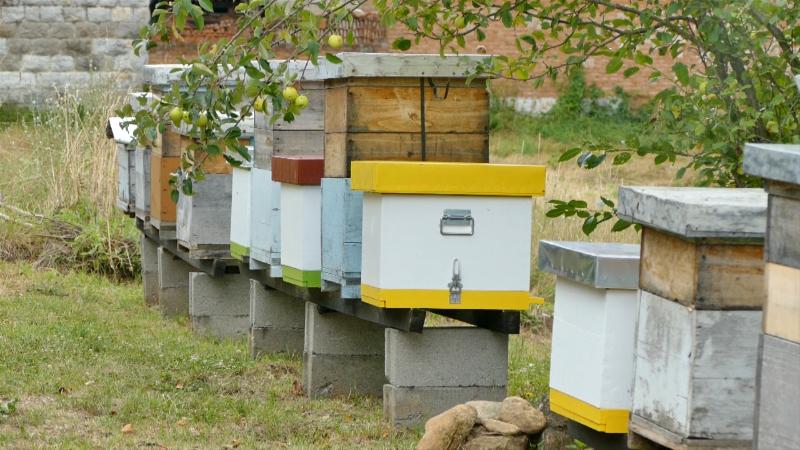 """""""Mesec zaštite pčela"""""""