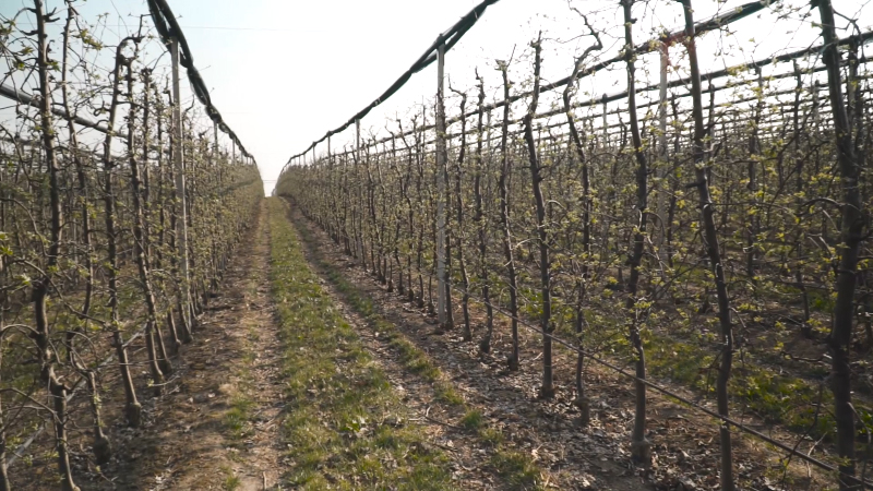 Agromarket ima rešenje za suzbijanje najznačajnijih bolesti
