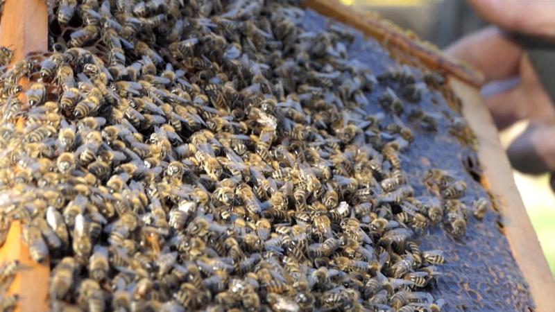 Nepravilno korišćenje sredstava za zaštitu bilja glavna opasnost po pčele