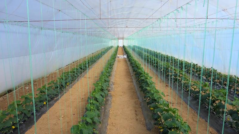 Fotofert hraniva za dobar rod i visok kvalitet povrća