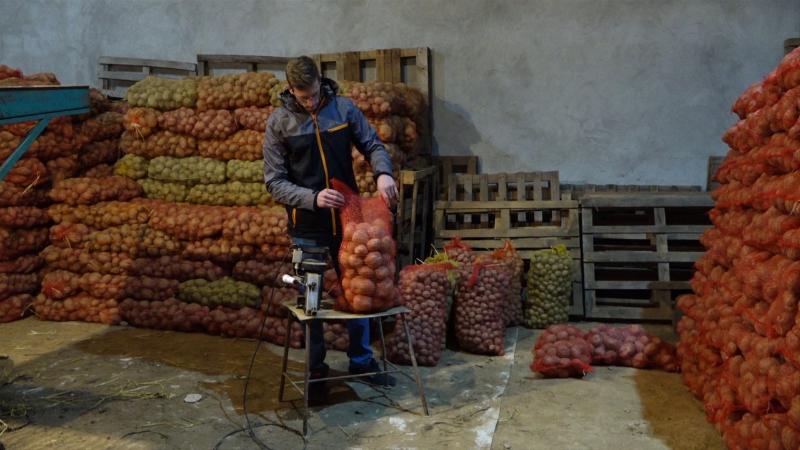 Ruski krompir duplo jeftiniji od domaćeg