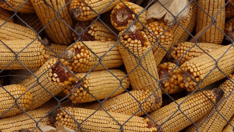 Niska cena sirovina uticala na krajnji finansijski rezultat