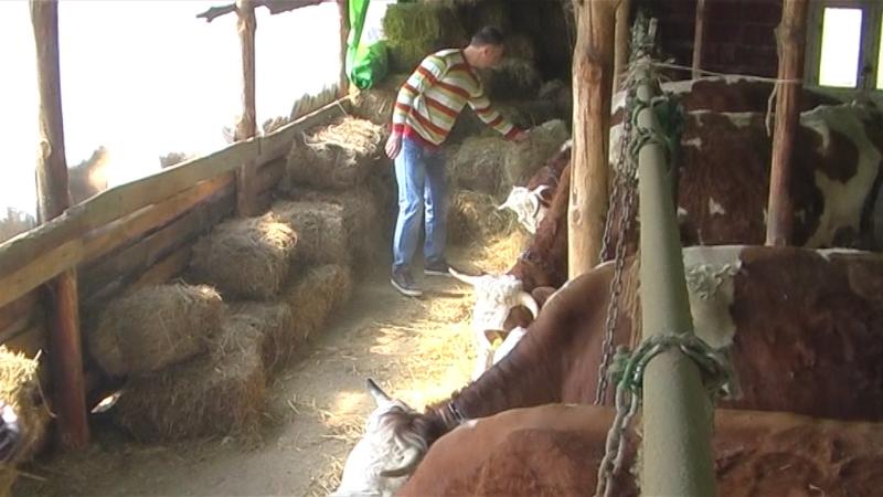 Stočari uz pomoć mlekara razvijaju proizvodnju
