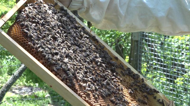 Stari i oprobani načini pčelarenja