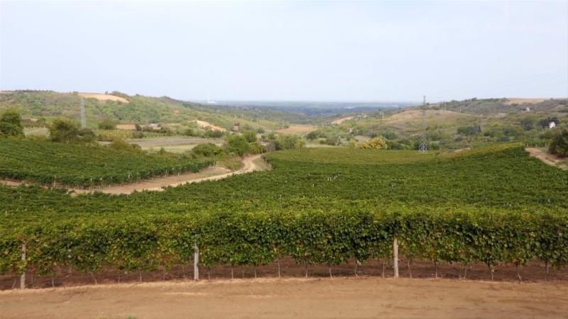 Put vina kao turistički i kulturni brend u prekograničnom regionu