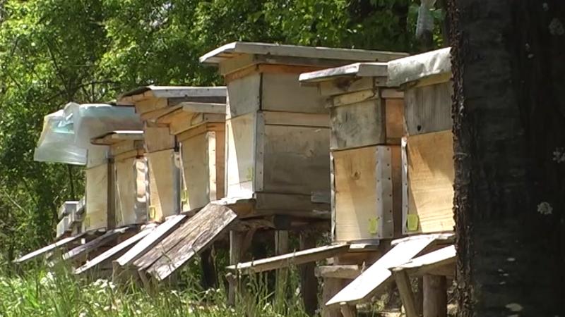 Kiša i hladno vreme omeli pčelinje zajednice