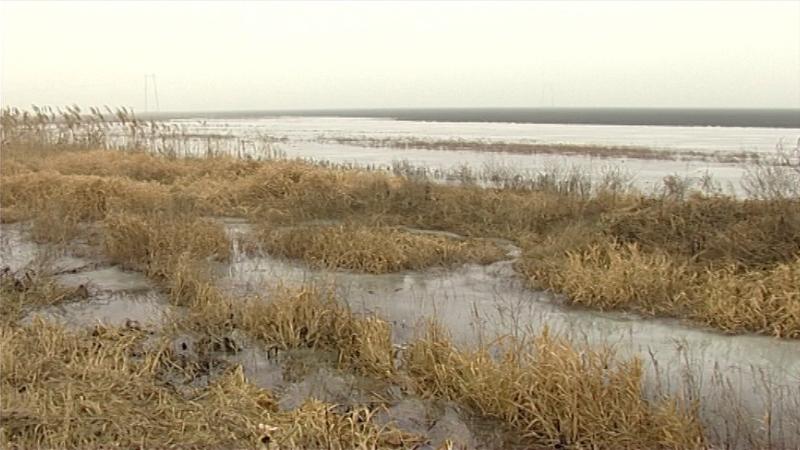 Za sada teško proceniti gubitak u poljoprivredi od poplava