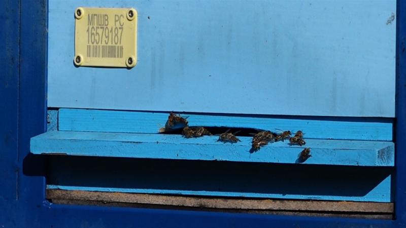 U toku prijave za školu urbanog pčelarstva