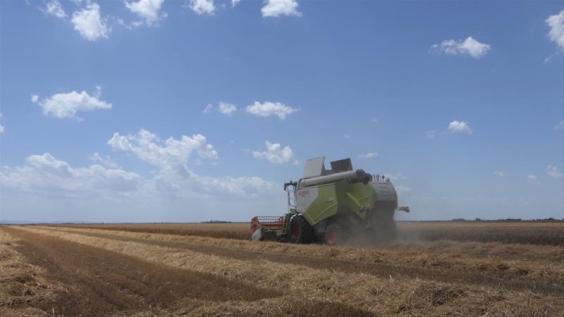 Prvi otkosi pšenice za petnaestak dana