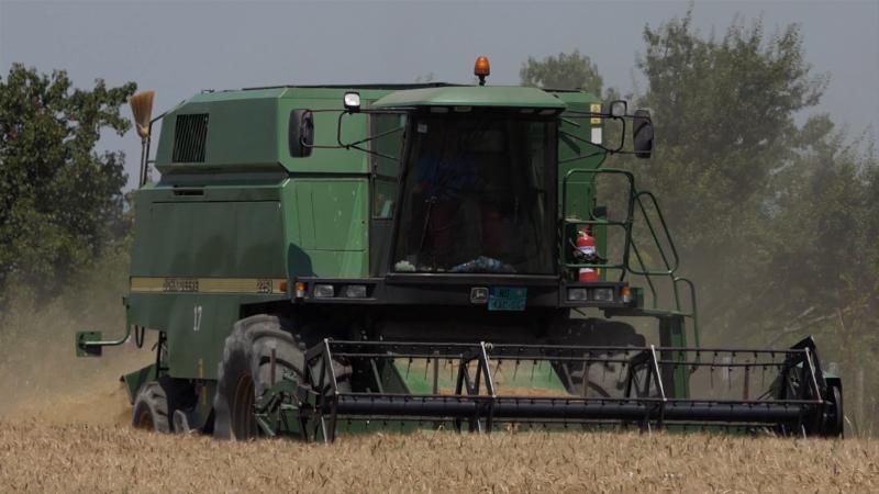 Kvalitet pšenice ove godine nije zadovoljavajuć