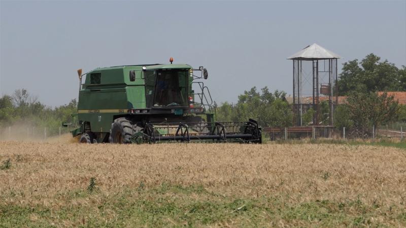 Za sada pšenicu otkupljuju samo mlinari