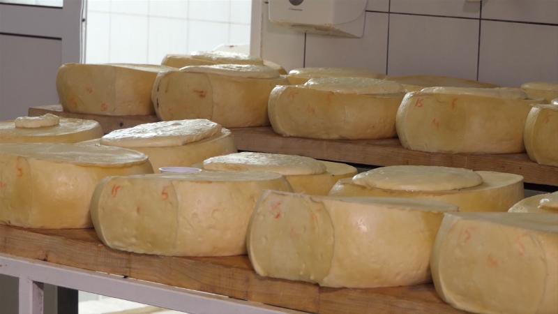 """""""Festival sira i kačkavalja"""" prilika za degustaciju tradicionalnih proizvoda"""