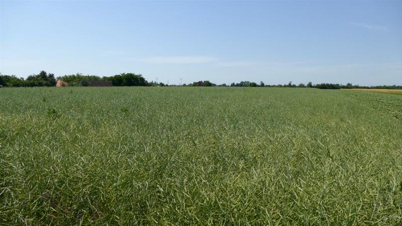 Stočari mogu dobiti zemlju na period od jedne do osam godina
