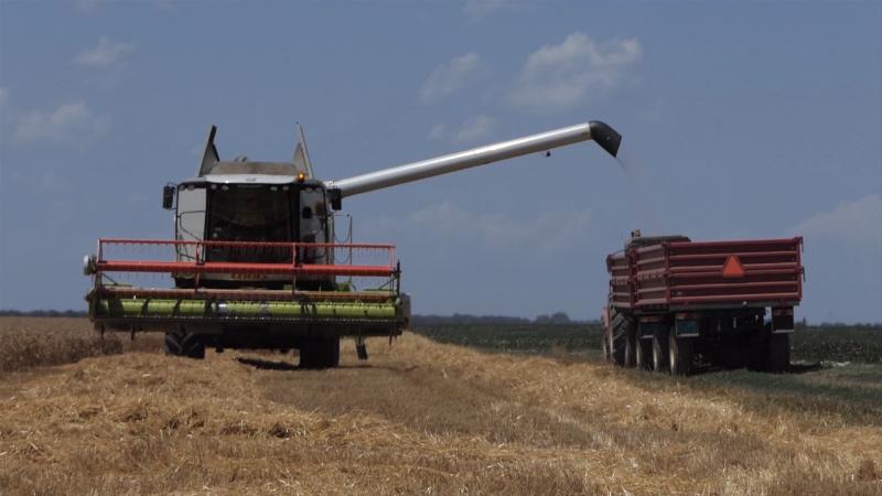 Srbija pokvarila svoj brend sejući nekvalitetnu pšenicu