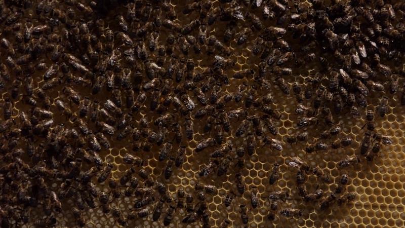 Dva miliona dinara za razvoj pčelarstva u Somboru