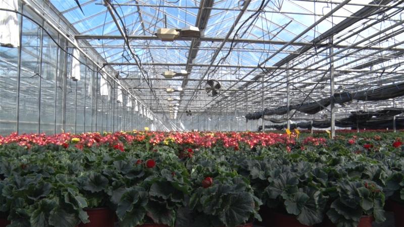 Cvećarstvo zahtevan i skup posao