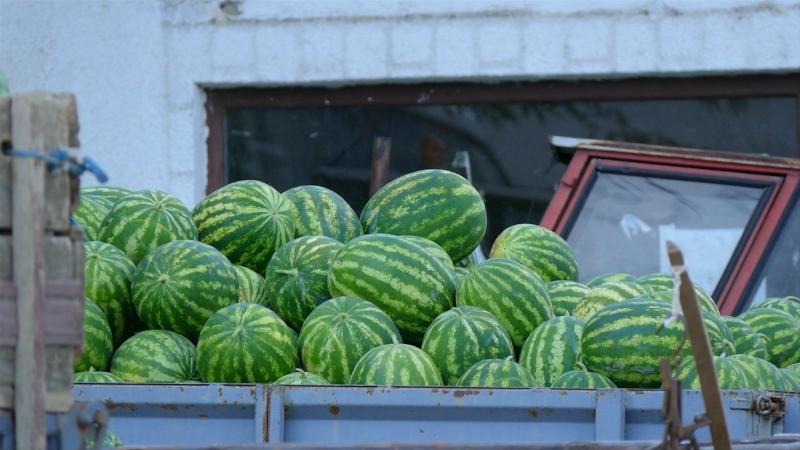 Manifestacija koja slavi rod lubenice i dinje