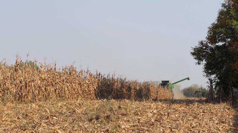 Pšenica najtrgovanija roba