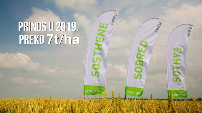 Agromarket preporučuje sorte pšenice za sigurnu proizvodnju