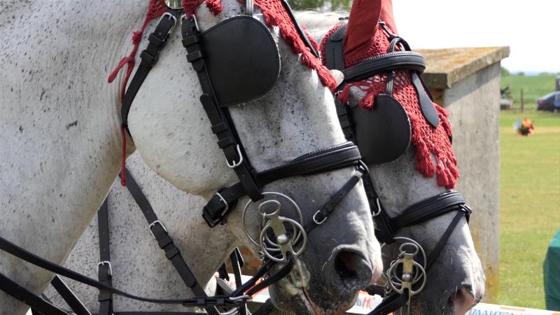 Imamo kvalitetne konje, ali bez zvaničnog pedigrea