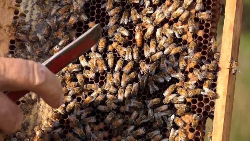 Broj košnica raste za oko 43,7 hiljada godišnje