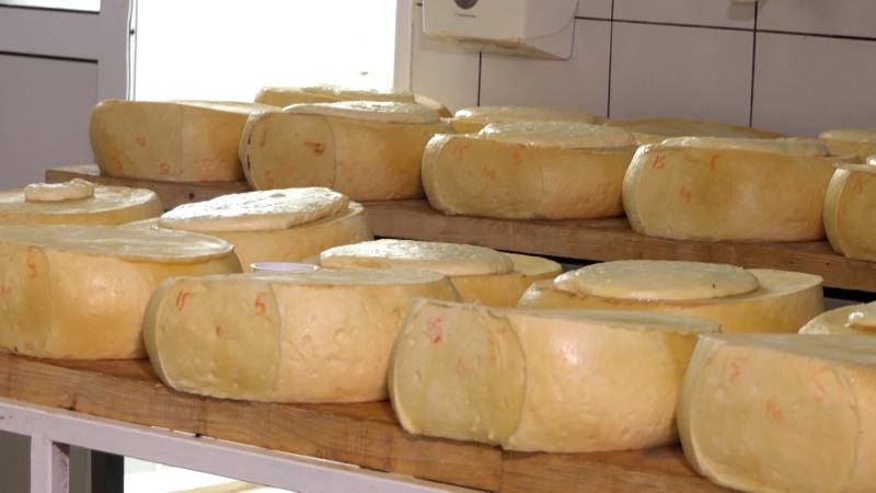 Kroz praktičnu nastavu stasavaju budući pekari i mlekari