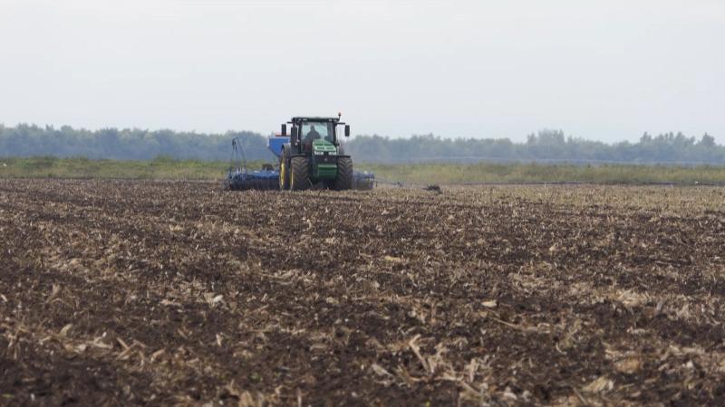 Pod pšenicom više od 30 000 hektara