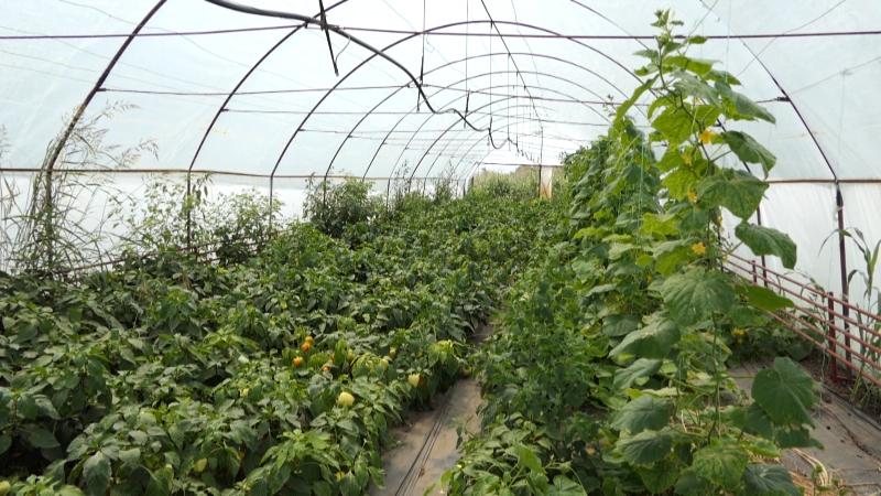 Podstiču mlade poljoprivrednike da se okrenu povrtarstvu
