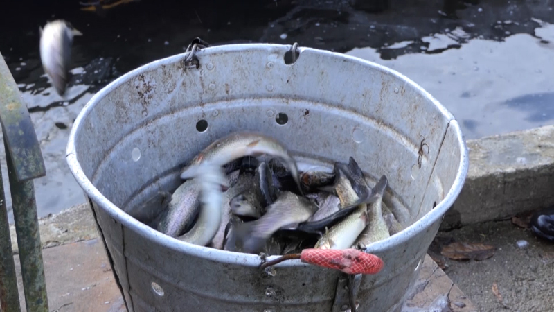 Trećina ribnjaka posluje van legalnih okvira
