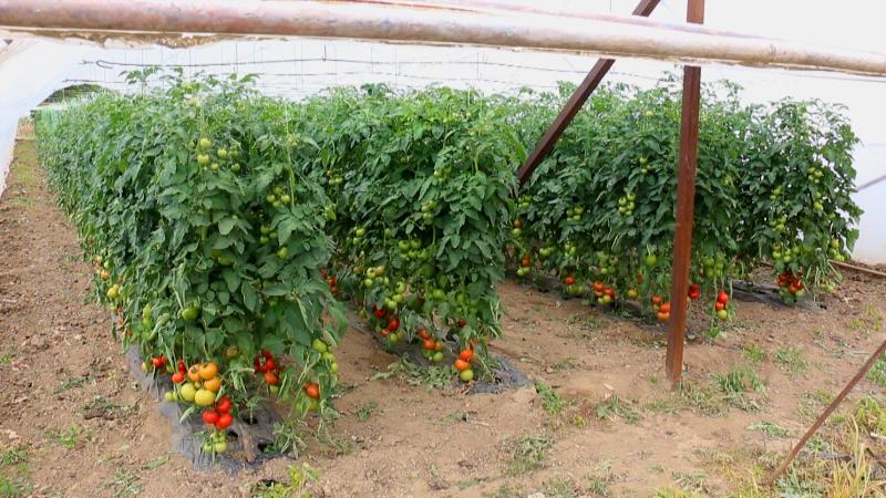 Poljoprivrednici iz Pirota posetiće Bugarsku, Tursku i Grčku