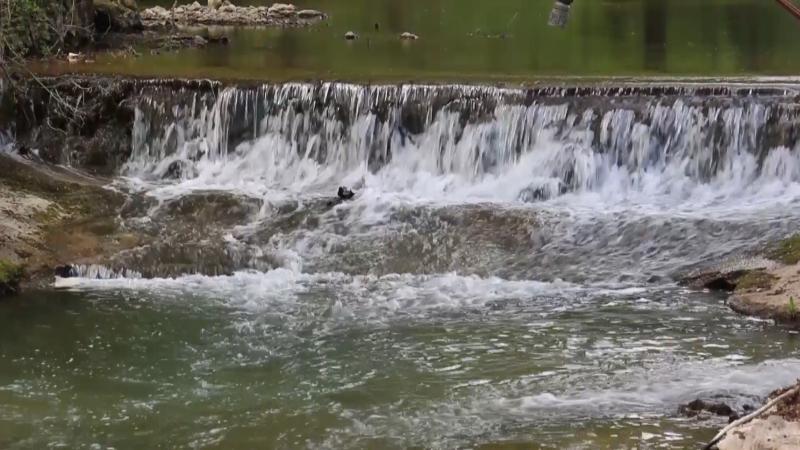 Planira se proizvodnja do milion rečnih pastrmki godišnje