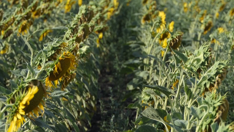 U Srbiji više od 60 % uzoraka zemljišta ima nizak sadržaj organskih materija