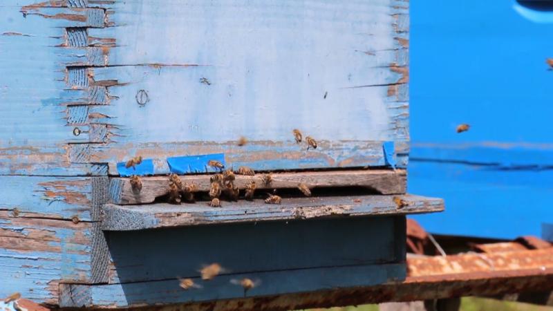 Korišćenjem antibiotika pčelari ugrožavaju plasman meda