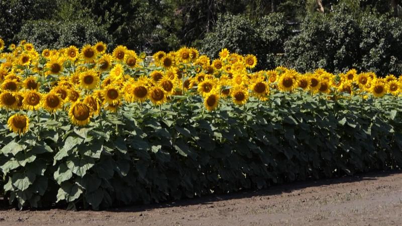Podići svest o značaju zaštite i očuvanja zdravlja bilja