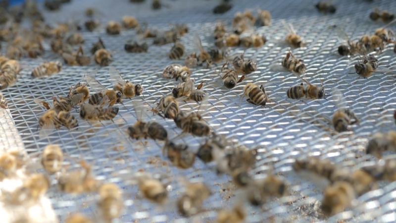 Proširiti svest o značaju pčela