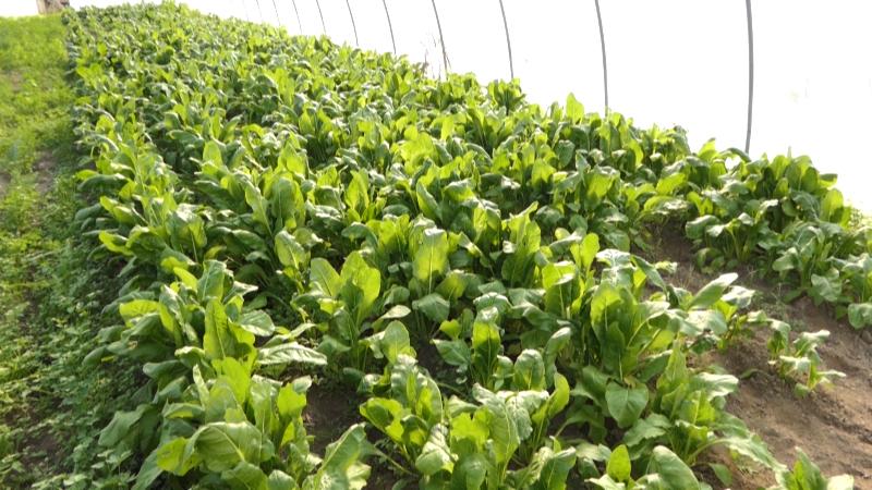 Održiva poljoprivreda na usluzi sadašnjim i budućim generacijama