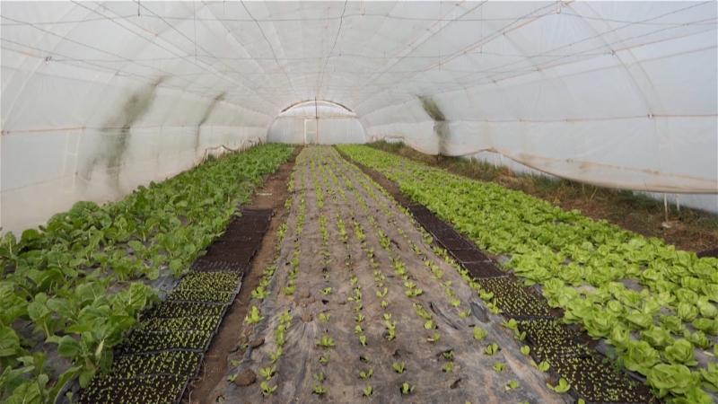 Neophodno da poljoprivredno gazdinstvo obrađuje od 25 do 30 hektara