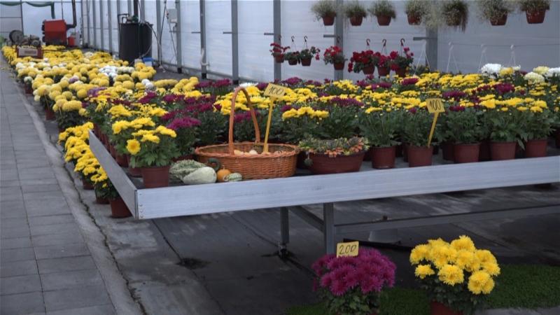 Problem sa prodajom cveća