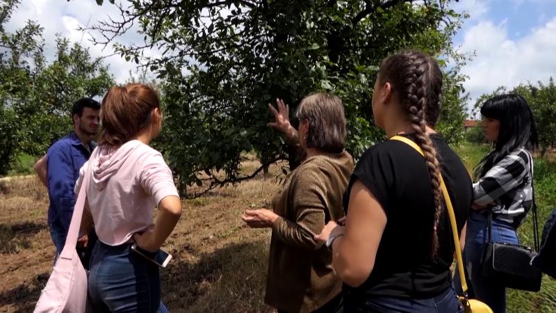 Na oglednom polju trenutno se sadi krompir