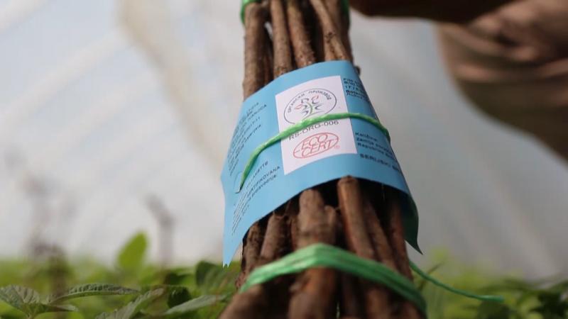 Zdrave i sertifikovane sadnice - osnova dobrog voćnjaka