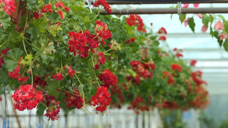 Cvećarstvo - najlepša grana poljoprivrede