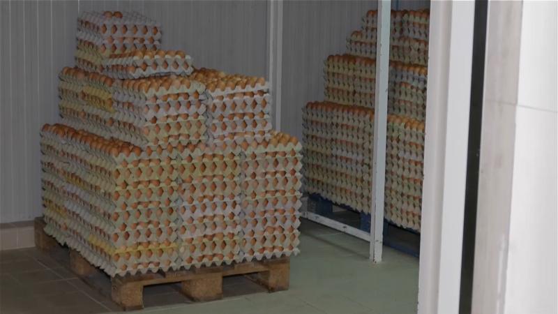 Problemi i sa jajima i pilićima