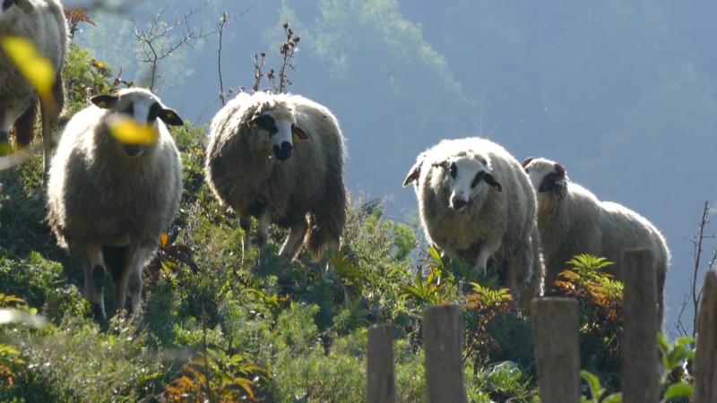 U planinskim selima nema kupaca za jagnjad