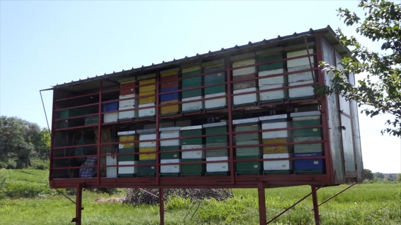 Cilj - povećati izvoz meda