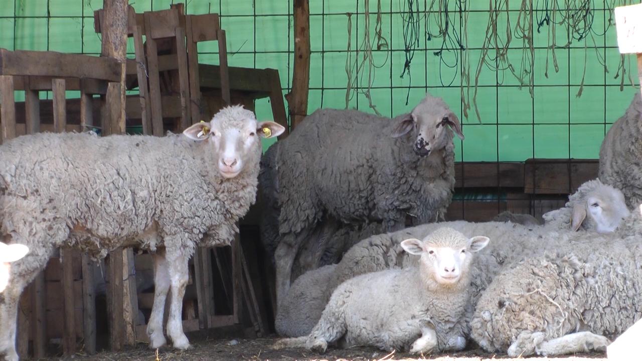 Ujedinjeni stočarstvo i ergela