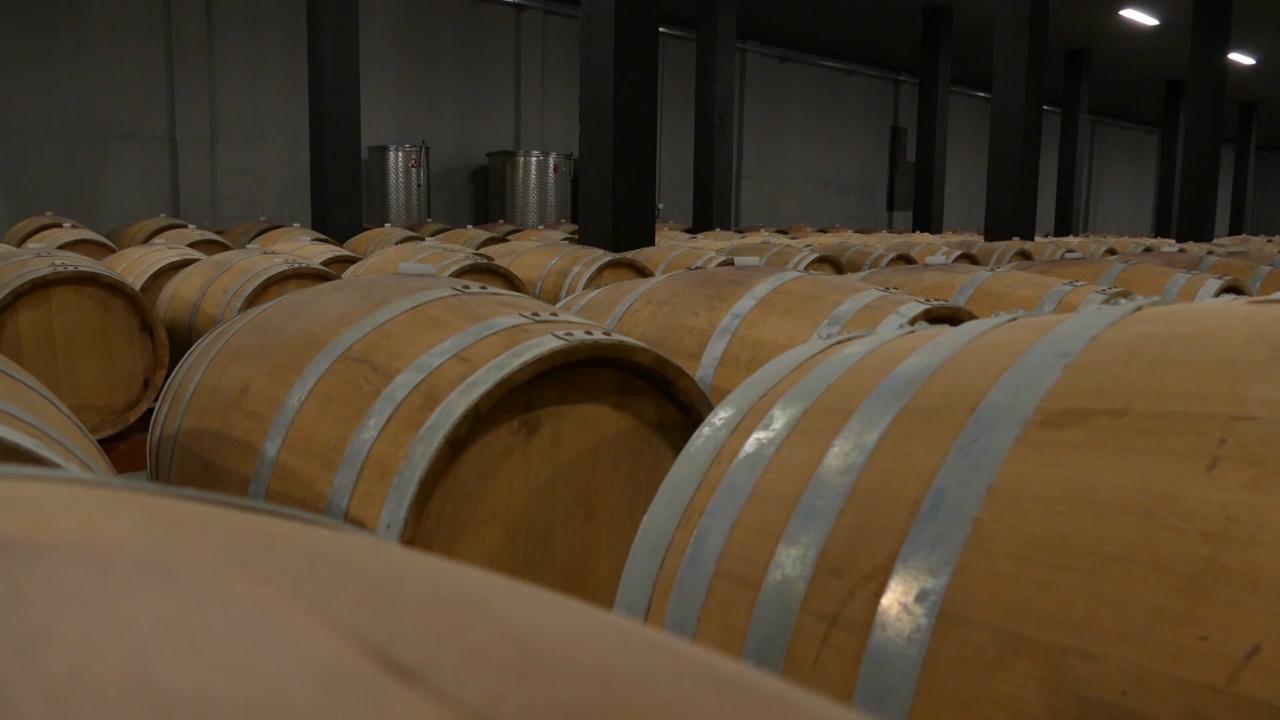 Udruživanjem do unapređenja proizvodnje i prodaje vina