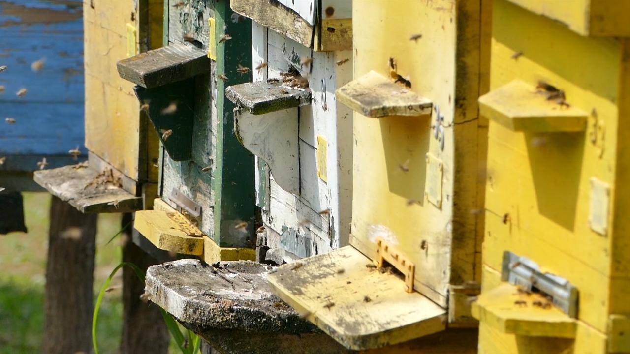 Promenjen pravilnik o podsticajima za pčelare
