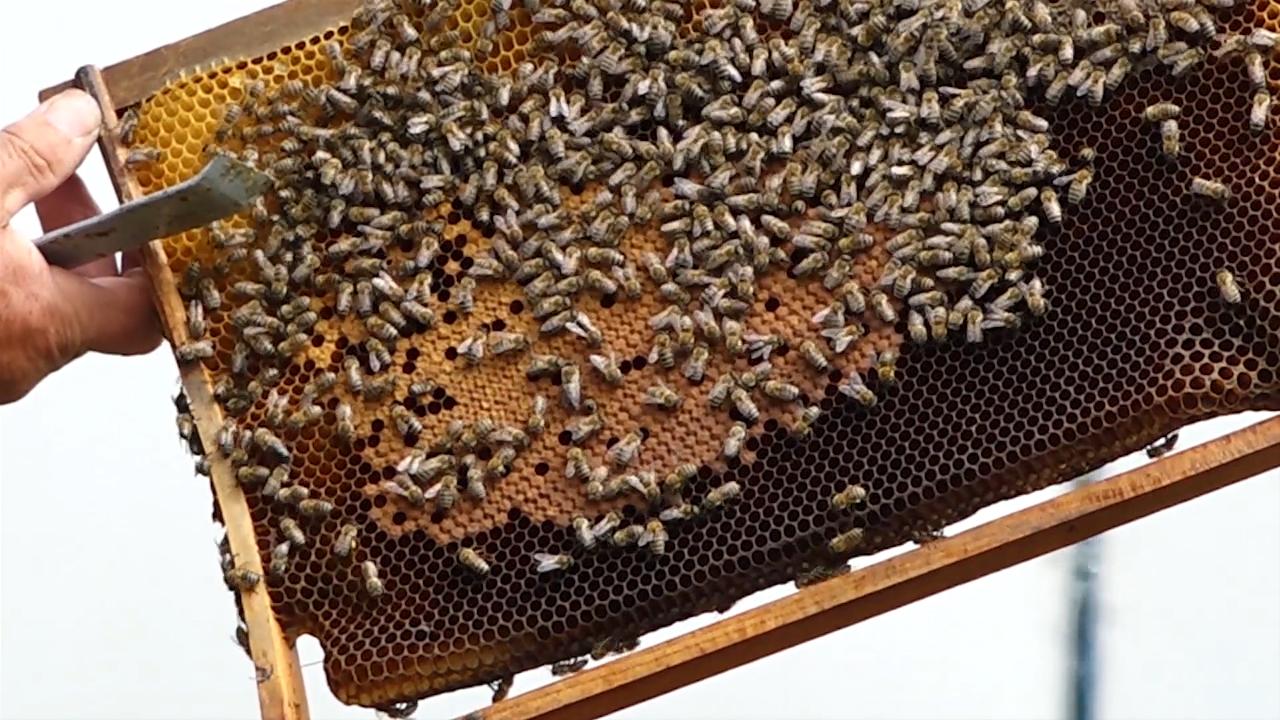 10 puta veća ulaganja u pčelarstvo