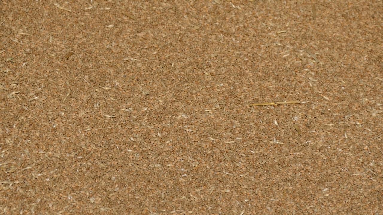 Ratari očekuju da najavljeni otkup poveća cenu pšenice