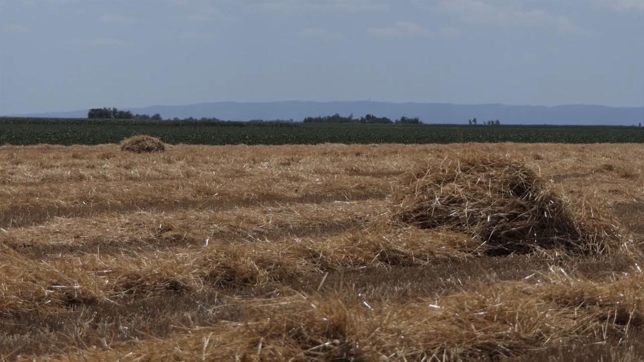 Kvalitet pšenice diže cenu